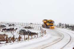 © Licensed to London News Pictures. 1/03/2018. Builth Wells, Powys, Wales, UK. On the first day of Spring, a gritter truck drives through horrendous blizzard conditions on the B4520 road (Brecon Road) between Builth Wells and Brecon on the high moorland of the Mynydd Epynt range. Blizzards and temperatures around minus 5-7 degrees Centigrade with 'feels like' of approximately minus 10 degrees on high land hit Mid Wales last night and today. Photo credit: Graham M. Lawrence/LNP