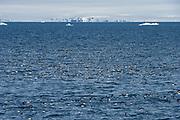Brunnich's Guillemot<br /> (Uria lomvia)<br /> Alkefjellet Bird cliffs<br /> Spitsbergen<br /> Svalbard<br /> Norway<br /> Arctic Ocean