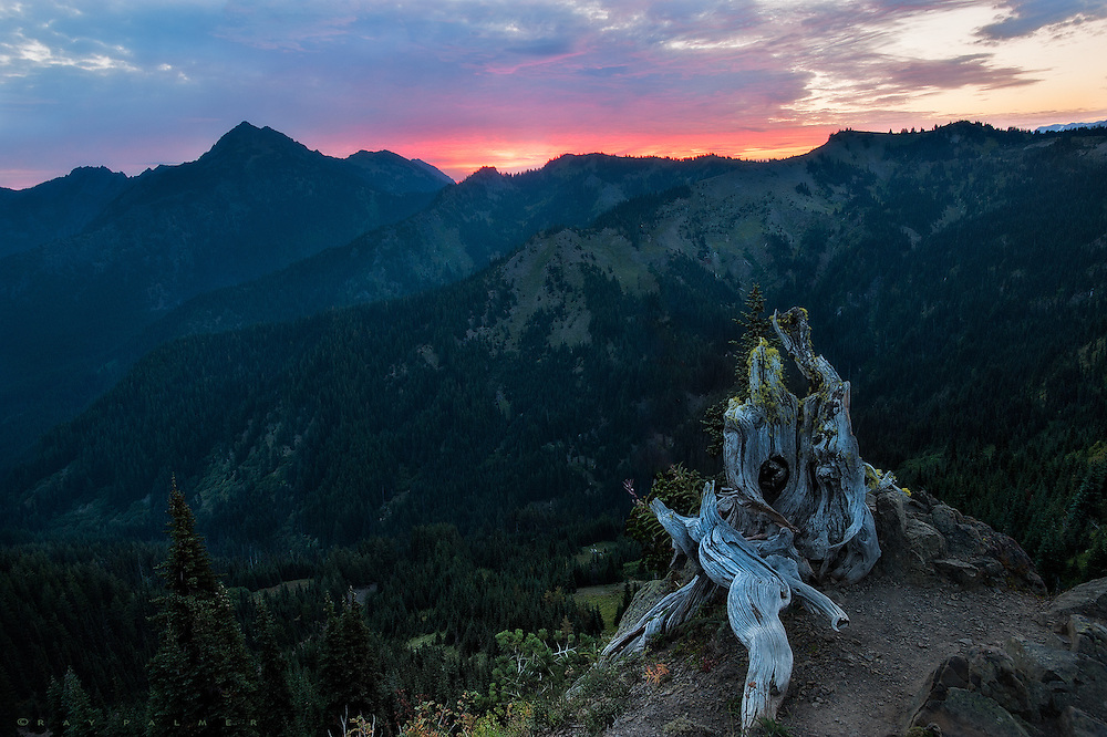 Olympic National Park, Washington.  I drove the switchbacks up to here in the dark, the mountainsides impossibly steep on each side of the road.  I trudged up Hurricane Hill until I saw the little promontory I had spied the previous evening, then puffed my way up to the top of the cliff as the sky began to smudge.  The remains of a tree marked the edge of the void, where I crouched, hands in armpits to stay warm, watching my breath.  This is an older image, when I was more motivated for sunrise.  I wonder why I was...was it the promise, the anticipation, the Hope that a good sunrise implies?  But hope is a stupid thing, a sure disappointment, a dream waiting to be be ruined by waking.  We are only human, we can't help wanting things to be...but it's better not to expect, not to cherish that desire. Better to be taken by surprise. Some mornings are glorious, some go bust.  Sometimes I'll be there and let it happen, one way or the other.