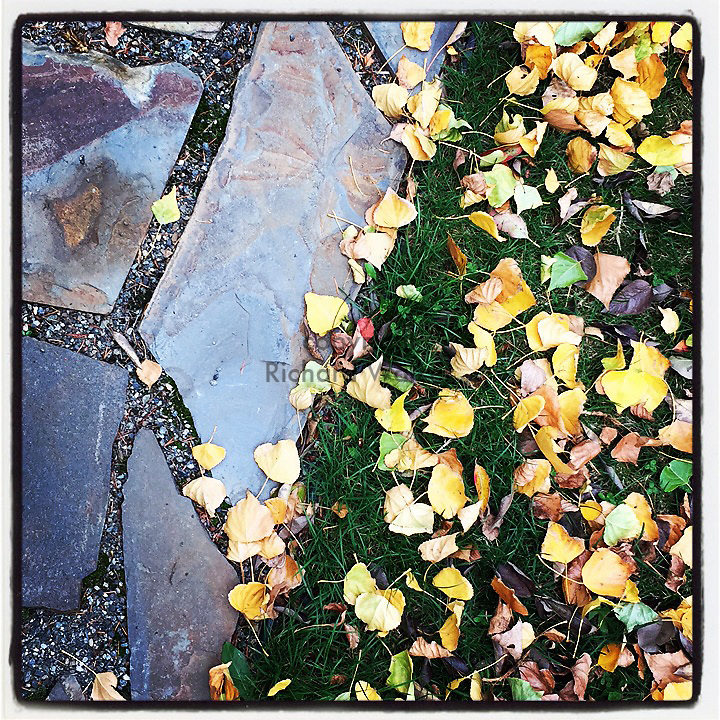 2017 NOVEMBER 08 - Autumn leaves and path in Seattle, WA, USA. Taken with Apple iPhone and processed through Instagram app. By Richard Walker