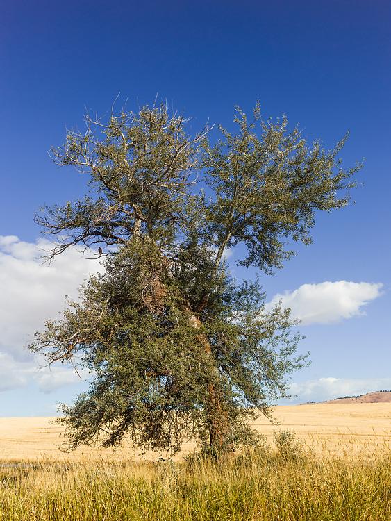 https://Duncan.co/bird-in-a-tree