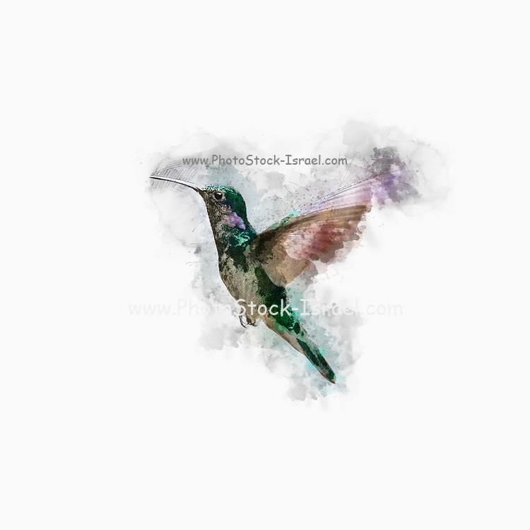 Digitally enhanced image a hovering hummingbird
