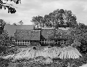 Farm House and Garden with Cut Reed for Making a New Traditional Roof, Borstel, Lower Saxony, 1928