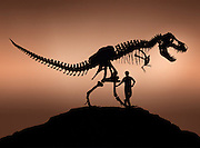 """T. Rex, """"tyrant lizard king,"""" was excavated and prepared by the Black Hills Institute and named after the discoveror, Stan Sacrison.  Shown with Black Hills Institute founder and author Pete Larson."""