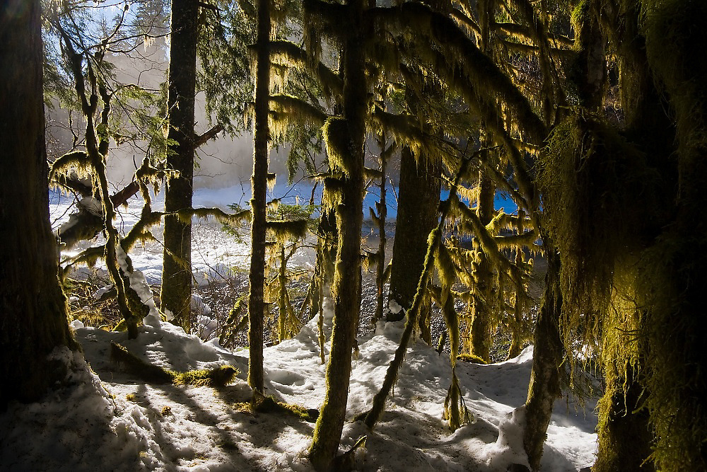 Trees covered in hanging moss along Goodell Creek, North Cascades National Park, Washington.