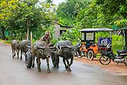 Oxcart, Angkor, Siem Reap, Cambodia