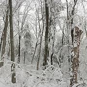 Winter Woods in Breakheart Reservation, Wakefield, MA