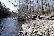 Godeffroy, New York - Tree trunks and other debris from flooding is piled up on the shore of the Neversink River in the Neversink Preserve of the Nature Conservancy on March 7, 2012.