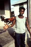 Cockfight in Trenchtown