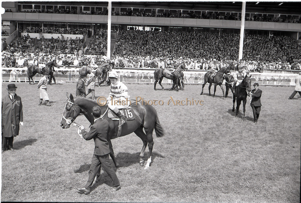 """26/06/1965<br /> 06/26/1965<br /> 26 June 1965<br /> Irish Sweeps Derby at the Curragh Race Course, Co. Kildare. The horses on the track before the race. Horses are no.15 """"Meadow Court"""" (Lester Piggott up); no.16 """"Scrapani"""", (W.B. Piers up); no.17 """"Flaming Red"""" (J. Roe up); no.18 """"Kilcoran"""", (M. Kennedy up); no.20 """"Niksar"""" (R. Poincelot up) and no. 21 """"Convamore"""" (J. Lindley up)."""