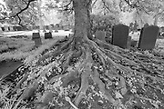 The cemetery at the University of Virginia in Charlottesville, Va. Photo/Andrew Shurtleff Photography, LLC