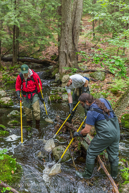 New Hampshire Fish and Game's Scott Decker (red) and John Magee (white) and Jeff Littleton (blue) of Moosewood Ecological, conduct a fish survey on a small stream in Barrington, New Hampshire.