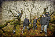 Clones in Wistman's Wood, Dartmoor
