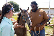 AFS Equine Behavior and Handling class