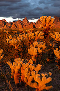 Cholla and the Kofa Mountains at Sunset, Kofa Wilderness, Kofa National Wildlife Refuge, Yuma County, Arizona