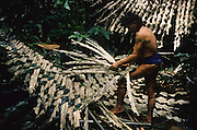 PENAN SAGO, MALAYSIA. Sarawak, Borneo, South East Asia. Baru, a semi-nomadic Penan retrieving flour from the sago root, 1989<br /> <br /> Tropical rainforest and one of the world's richest, oldest eco-systems, flora and fauna, under threat from development, logging and deforestation. Home to indigenous Dayak native tribal peoples, farming by slash and burn cultivation, fishing and hunting wild boar. Home to the Penan, traditional nomadic hunter-gatherers, of whom only one thousand survive, eating roots, and hunting wild animals with blowpipes. Animists, Christians, they still practice traditional medicine from herbs and plants. Native people have mounted protests and blockades against logging concessions, many have been arrested and imprisoned.