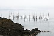 Herring weirs off Campobello Island