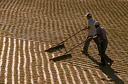 Areado, Minas Gerais, Brasil. 07/2002. .Secagem de cafe. Trabalhadores rurais espalhando os graos./ Drying out coffee. Workers spreading the grains..Foto © Marcos Issa/Argosfoto