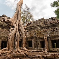 """According to """"Wikipedia"""" - The temple of Ta Prohm was abandoned after the fall of the Khmer empire in the 15th century, and neglected for centuries. When the effort to conserve and restore the temples of Angkor began in the early 20th century, the École française d'Extrême-Orient decided that Ta Prohm would be left largely as it had been found, as a """"concession to the general taste for the picturesque."""" According to pioneering Angkor scholar Maurice Glaize, Ta Prohm was singled out because it was """"one of the most imposing """"temples"""" and the one which had best merged with the jungle, but not yet to the point of becoming a part of it"""". Nevertheless, much work has been done to stabilize the ruins, to permit access, and to maintain this condition of apparent neglect""""."""