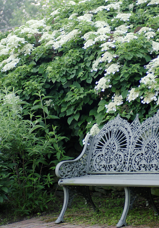 BENCH WITH HYDRANGEA
