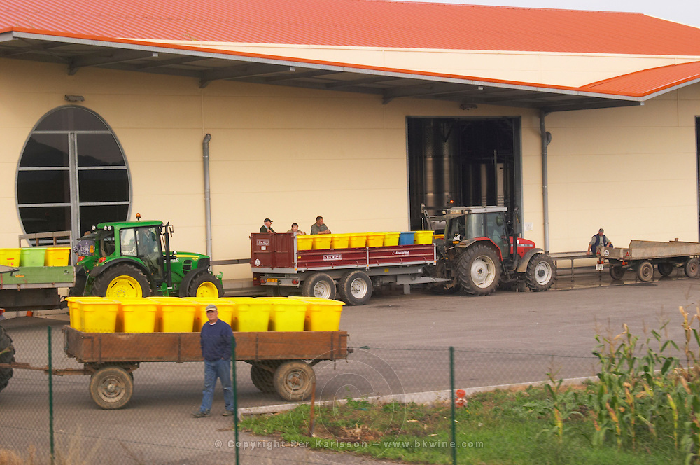 grapes in plastic crates arriving at cooperative alsace france