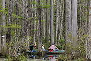 A group paddles a boat through the blackwater bald cypress and tupelo swamp during spring at Cypress Gardens April 9, 2014 in Moncks Corner, South Carolina.