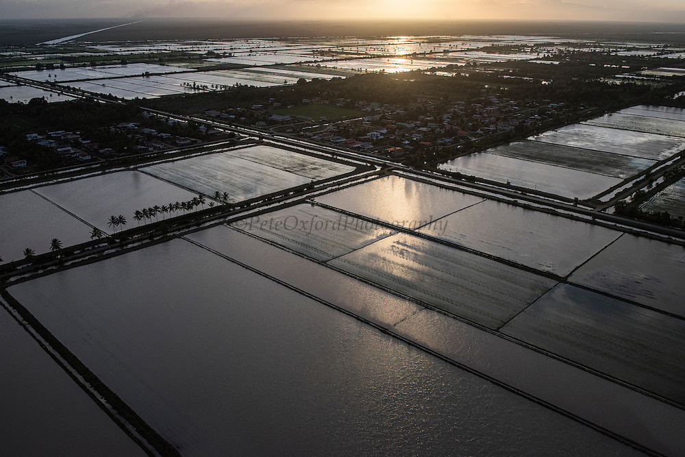 Rice production<br /> Coastal area<br /> Near Georgetown<br /> GUYANA<br /> South America