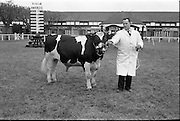 """20/02/1963.02/20/1963.20 February 1963.RDS Bull Show. Mr. William Sweetnam, Kilpatrick House, Bandon, Co. Cork, with his Friesian bull """"Ballinroher Carl"""", winner of Class 31 (for bulls calved from 1 March to 30 June 1962)."""