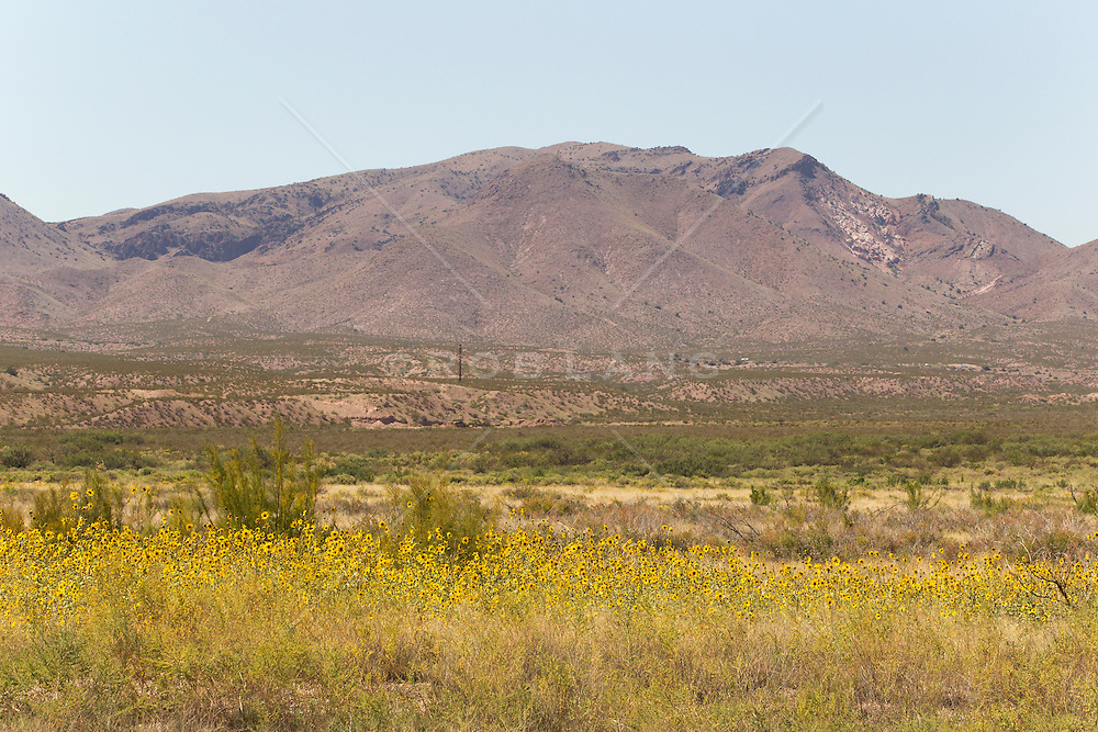 landscape in The Bosque del Apache National Wildlife Refuge in New Mexico