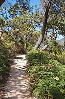 Stunning walks through gorgeous bushland on offer at Wilsons Promontory, Australia.