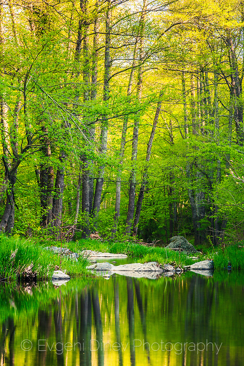 Reflection of gren trees in a river