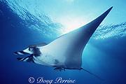 manta ray, Mobula birostris (formerly Manta birostris ), at The Boiler, San Benedicto, Revillagigedo National Park, Revillagigedos ( Socorro ) Islands, Mexico ( Eastern Pacific Ocean )