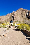 Hiker in Borrego Palm Canyon, Anza-Borrego Desert State Park, California USA