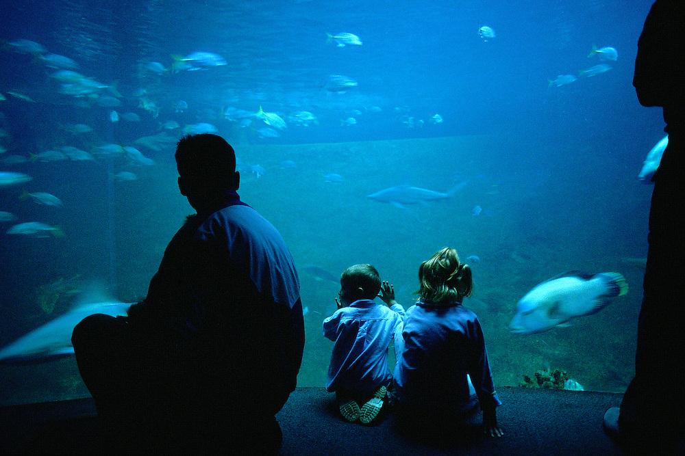 Homme et ses enfants devant un aquarium de Nausicaä, Centre National de la Mer, Boulogne-sur-Mer, Nord-Pas-de-Calais, France.<br /> Man and his children in front of an aquarium of Nausicaä, National Sea Centre, Boulogne-sur-Mer, Nord-Pas-de-Calais region.