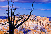 Silhouetted pines and evening light Bristlecone Point, Bryce Canyon National Park, Utah