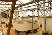 "A fish farm nursery tank for breeding sturgeon  ""Caviar et Prestige"" Saint Sulpice et Cameyrac  Entre-deux-Mers  Bordeaux Gironde Aquitaine France - at Caviar et Prestige"