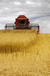 July 21, 2019 - Combine Harvester, North Yorkshire, England (Credit Image: © John Short/Design Pics via ZUMA Wire)