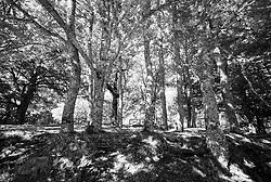 Biccari-Monte Cornacchia