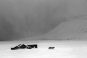 February 06 - Couple of Icelandic horses looking for shelter in ruins of an old Icelandic farm.<br />