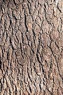 Close-up of cedar tree trunk bark in an old growth cedar forest near Bcharre, Lebanon
