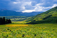 Field of wildflowers in the town of Mt. Crested Butte (ski resort), near Crested Butte, Colorado USA