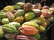 Africa, Madagascar, harvested cocoa pods