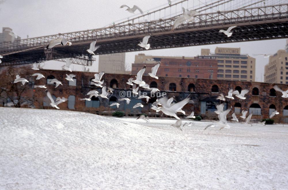 flock of sea gulls flying near bridge