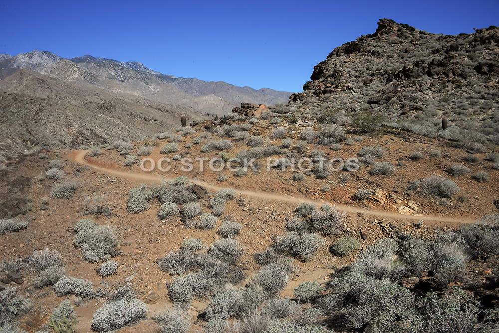 Indian Canyons and Palm Canyon in Palm Springs California