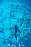 Bimini Road - blocks of limestone underwater off<br /> Bimini, Bahamas, claimed by some to be part of Atlantis;<br /> actually natural beach rock formations,<br /> Bimini, Bahamas ( Western Atlantic Ocean )