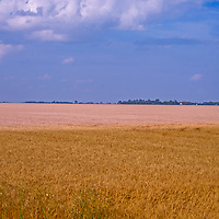 Summer clouds drift over what fields in southern Manitoba, Canada.
