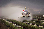 Crop dusting. Spraying wine grape vineyards with pesticides in Napa, California, USA.