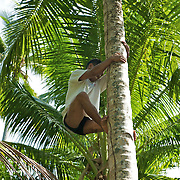Boy climbing a coconut tree.