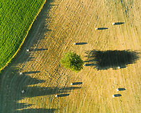 Aerial view of long tree shadow and straw bales in field, Correze, France.