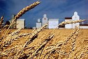 Saskatchewan, wheat and grain silos in the background.